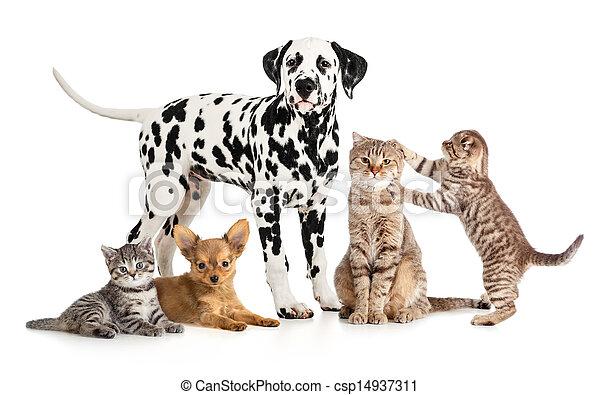 gruppe, collage, veterinär, freigestellt, petshop, haustiere, tiere, oder - csp14937311