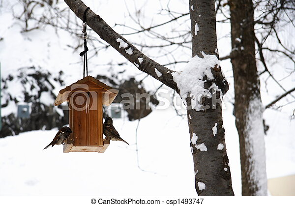 House sparrow eating in winter - csp1493747