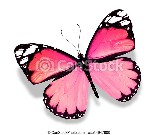 Stock Illustration of Pink butterfly, isolated on white ...