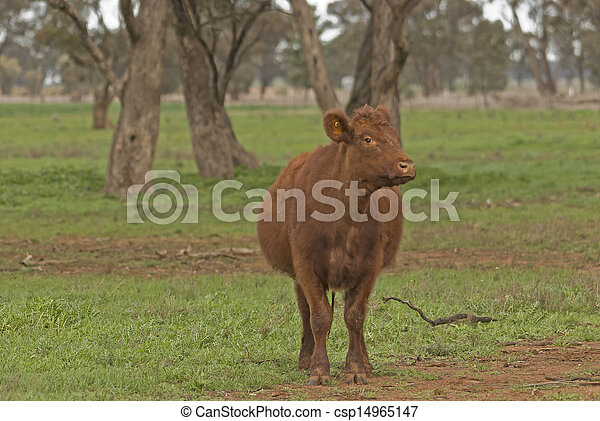 mammal - csp14965147