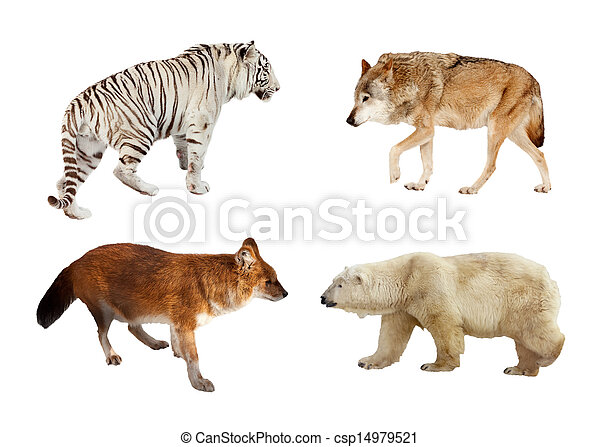 Carnivora mammals. Isolated over white  - csp14979521