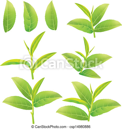 Green tea Illustrations and Clipart. 9,014 Green tea royalty free ...