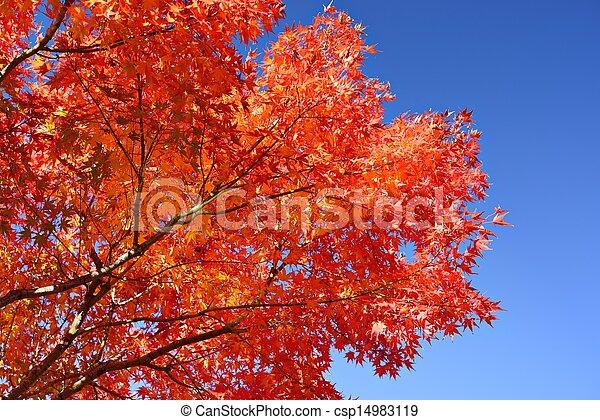 Fall Foliage in Nagoya, Japan - csp14983119
