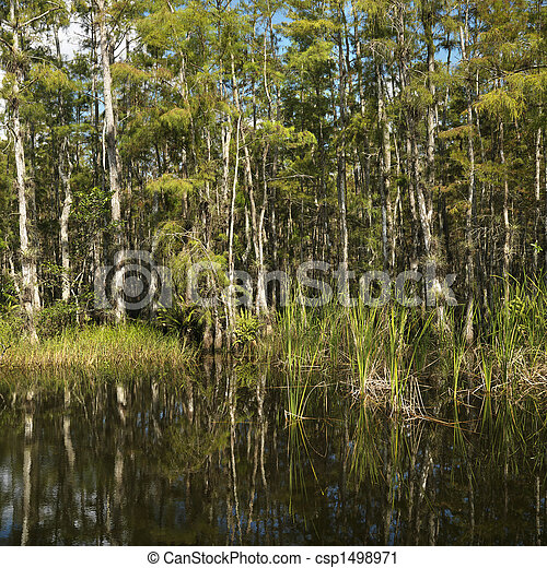 Florida Everglades wetland. - csp1498971