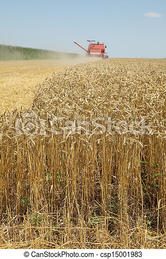 Agriculture, wheat harvest - csp15001983