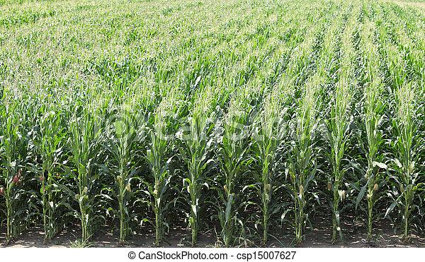 Agriculture - csp15007627