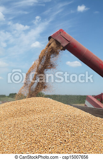 Agriculture, wheat harvest - csp15007656