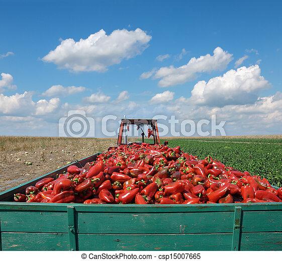 Agriculture - csp15007665