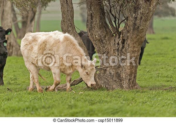 mammal - csp15011899