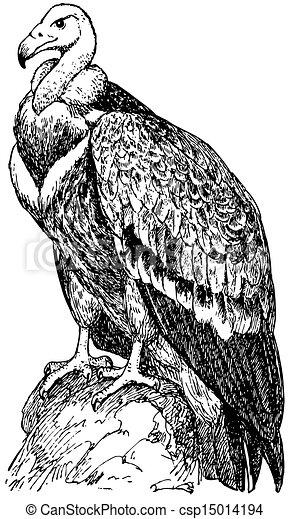Vulture Line Drawing Bird Griffon Vulture -