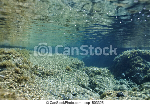 Tropical underwater scene. - csp1503325