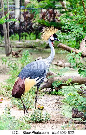 West african crowned crane bird