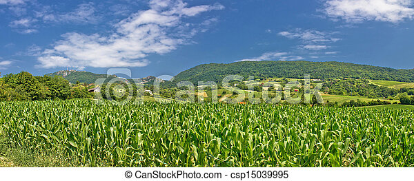 Green agriculture fields panoramic view - csp15039995