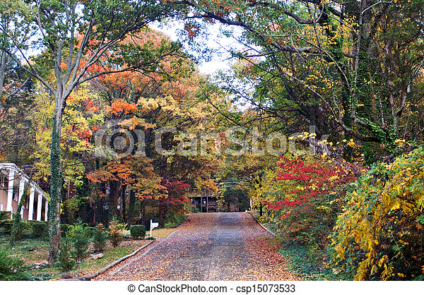 Colorful Fall Tree Lined Path - csp15073533