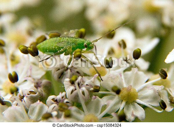 photo de vert puceron a vert puceron blanc wildflowers csp15084324 recherchez des. Black Bedroom Furniture Sets. Home Design Ideas