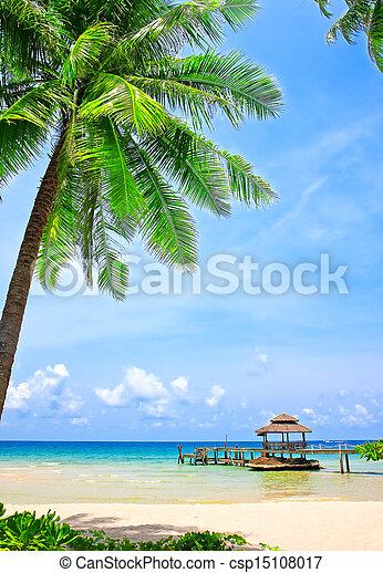 Palm tree in tropical perfect beach - csp15108017