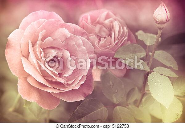 stock bilder von rosa blumen romantische abstrakt wasser rosen tropfen csp15122753. Black Bedroom Furniture Sets. Home Design Ideas