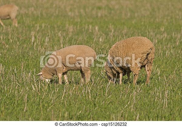 mammal - csp15126232