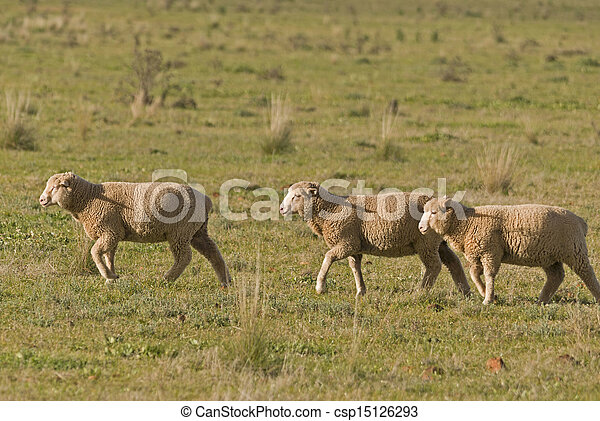 mammal - csp15126293