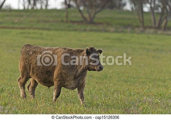 mammal - csp15126306