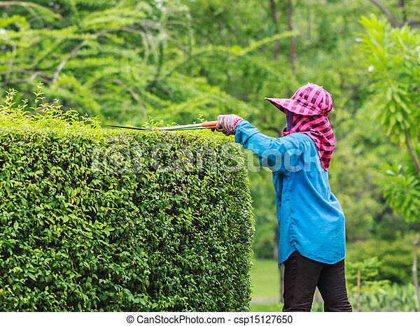 Stock Images Of Professional Gardener Pruning An Hedge In