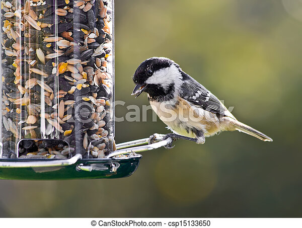 Coal Tit on a bird feeder. - csp15133650