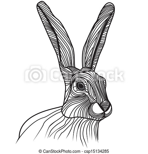 Hare Line Drawings Rabbit or Hare Head Vector