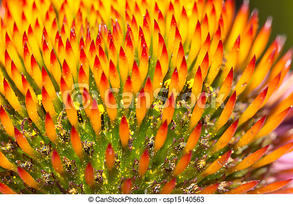 beautiful flower in nature. macro - csp15140563