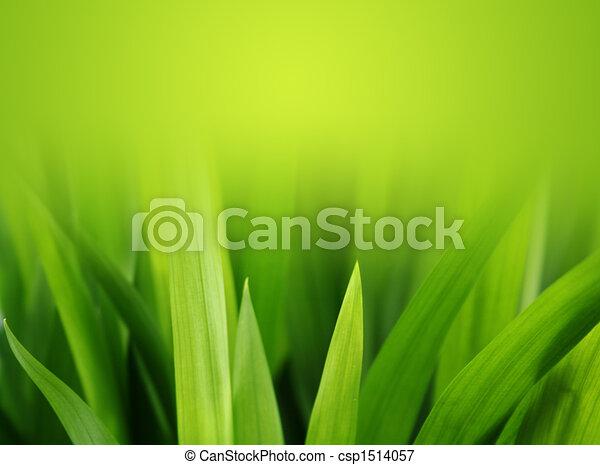 lush green grass - csp1514057