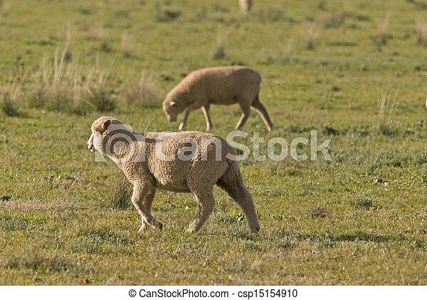 mammal - csp15154910
