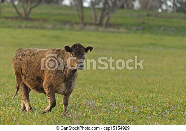 mammal - csp15154929