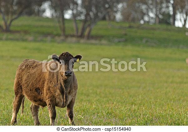 mammal - csp15154940