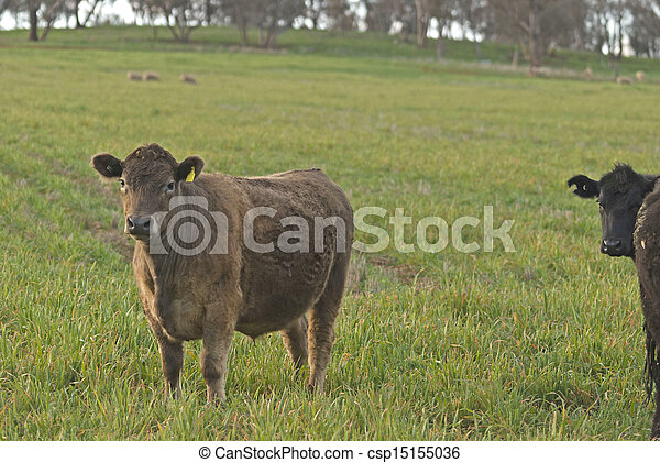 mammal - csp15155036
