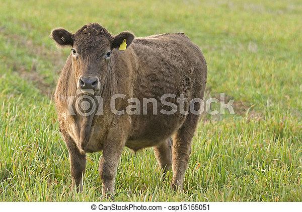 mammal - csp15155051