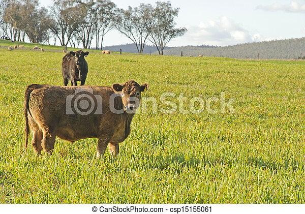 mammal - csp15155061
