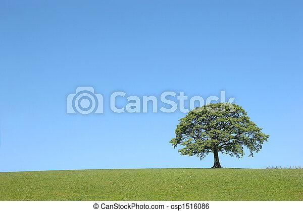 橡木, 樹, 美麗 - csp1516086