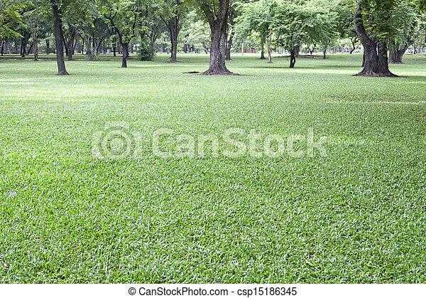 green grass field in public park - csp15186345