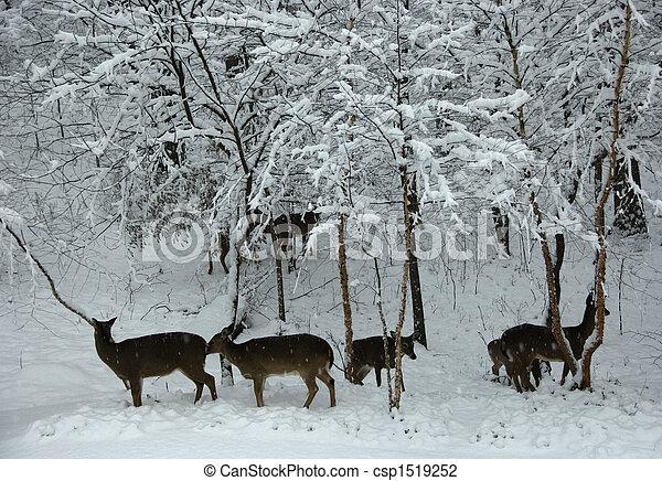 Deer in Snow Scenes Winter Snow Scene-deer