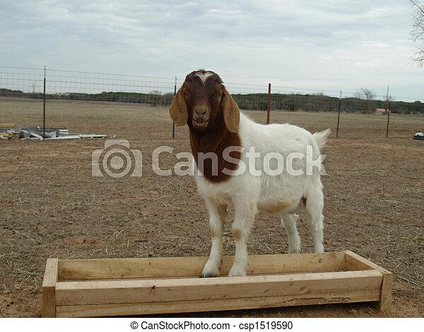 Billy Goat - csp1519590