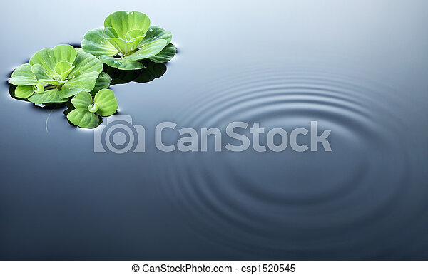 plants on water with ripples - csp1520545