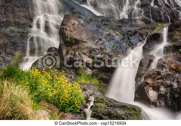 Todtnauer Waterfalls with yellow flowers, Black Forest, Germany - csp15216934