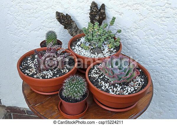 photographies de cactus composition pot fleurs fen tre jardin csp15224211 recherchez des. Black Bedroom Furniture Sets. Home Design Ideas