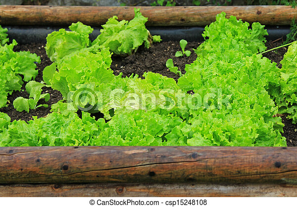 Home-grown vegetable - csp15248108