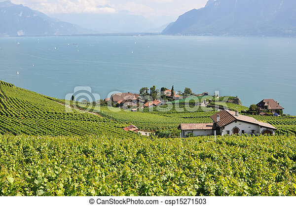 Famous vineyards in Lavaux region against Geneva lake. Switzerland - csp15271503