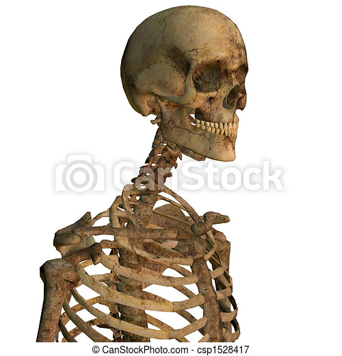 Aging human skeleton close up - csp1528417