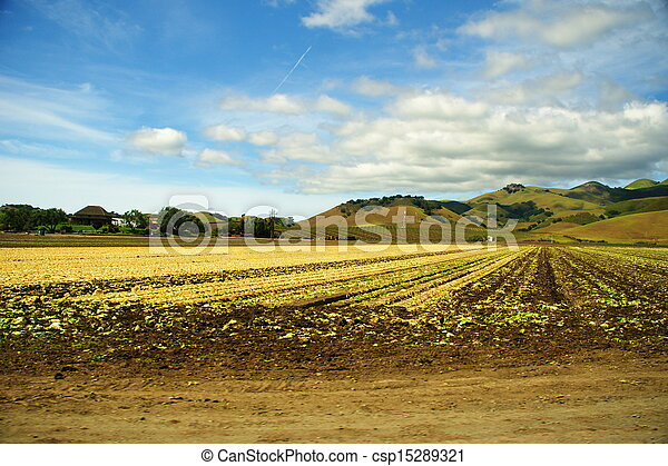 Broccoli Field Agriculture - csp15289321