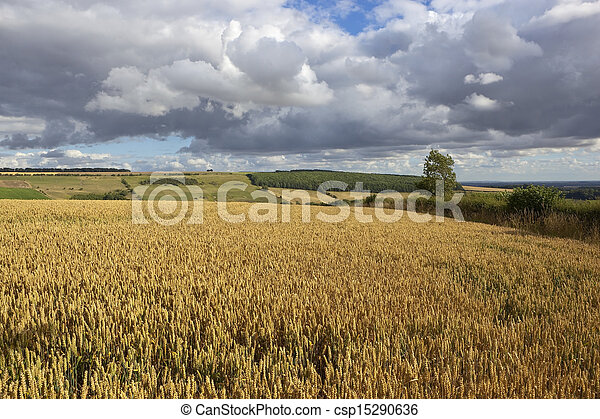 yorkshire wolds agriculture - csp15290636