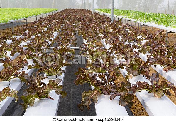 Vegetables hydroponics farms - csp15293845