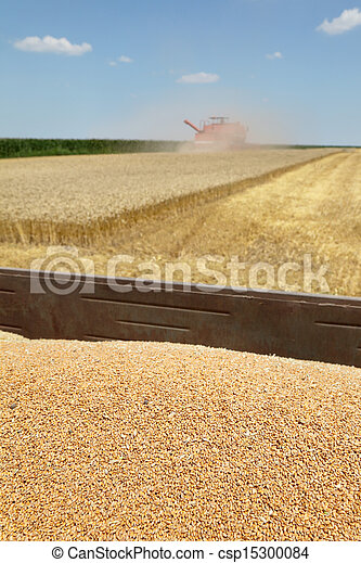 Agriculture, wheat harvest - csp15300084