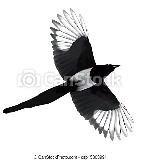 Stock Illustration Of Illustration Black Magpie